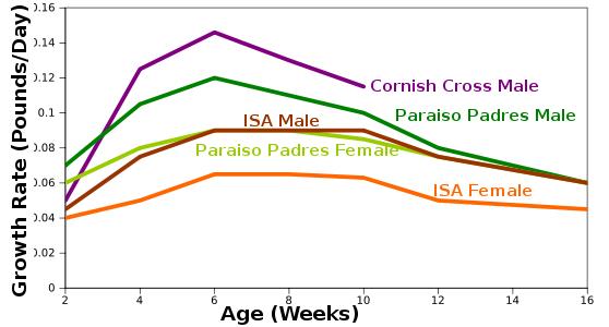 Chicken Growth Rate Avian Aqua Miser
