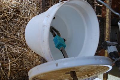 submersible Heated chicken waterer with bird bath deicer