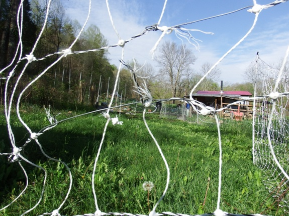 How to repair torn electric poultry netting | Avian Aqua Miser